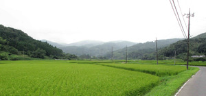 Onogoe