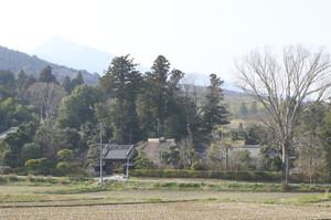 Kizakike9